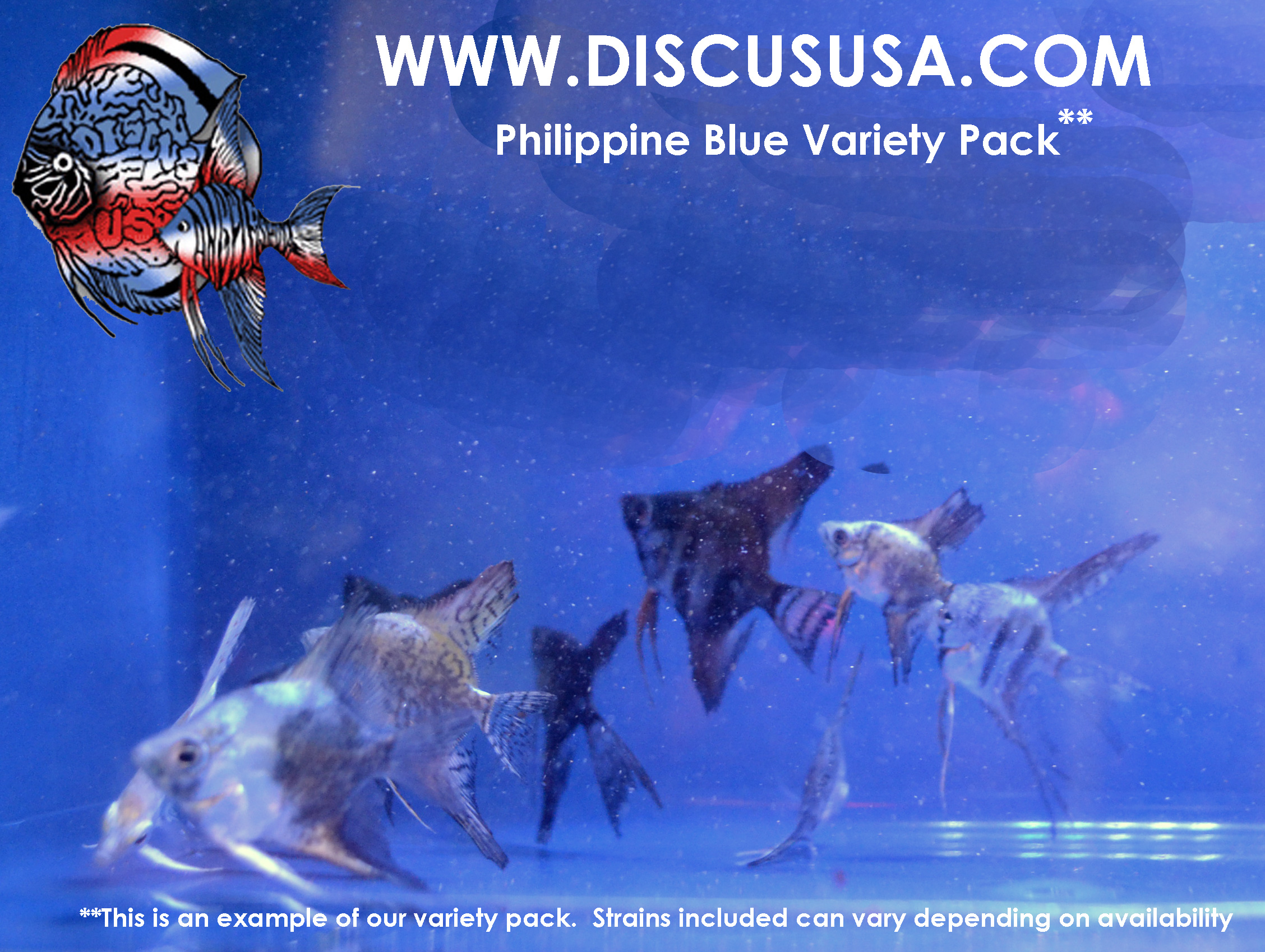 Philippine Blue Variety Pack Mediums Quarter+ Size (pack of 6)